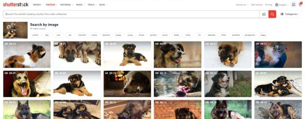 Shutterstock Launches Reverse Search Tool For Video 4